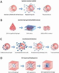 Schematics Of Technologies Available To Guide Tissue