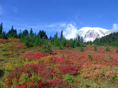 Fall At Mount Rainier National Park By Pokemontrainerjay
