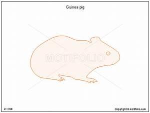 Guinea Pig Illustrations