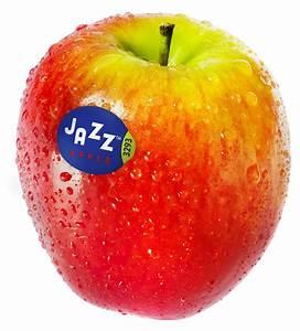 Nz-grown Jazz Apples Arrive In U S  With New Branding