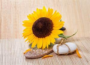 Sunflower Seed Oil Benefits – OROGOLD Reviews   OROGOLD ...