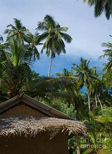 Coconut Palm Tree Garden Photograph by Christina Rahm
