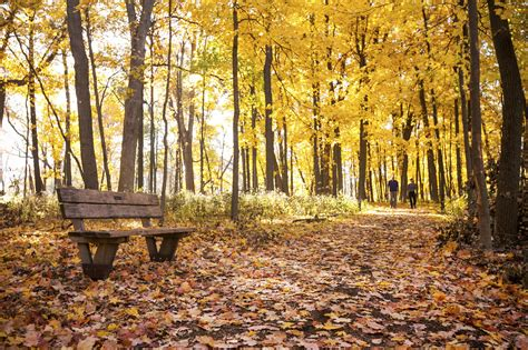 Best Places To See Fall Foliage In Chicago 2018