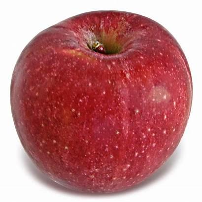 Stayman Apples Apple Mutsu Winesap Season Among