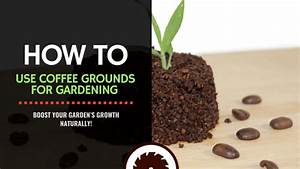 coffee grounds for gardening 6 easy ways to use them