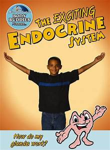 The Exciting Endocrine System  How Do My Glands Work