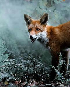 Photographer Shoots Finnish Forest Animals Like They're ...