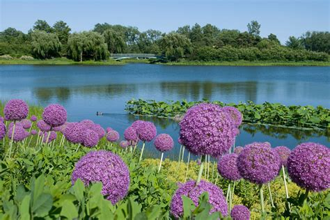 the 10 most beautiful botanical gardens across the united
