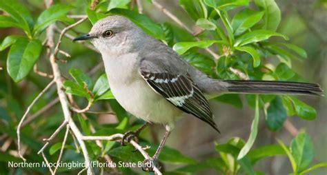 florida wild birds wild bird co bird feeding watching de