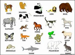 list of the most popular animals that start with b - we ...