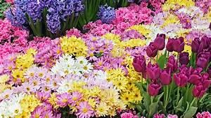 HD Wallpaper Flower Gardens
