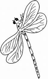 Dragonfly Coloring Libellule Fly Dragon Kleurplaat Libellen Libelle Printable Leukekleurplaten Kleurplaten Animaux Animals Insecten Coloriage Dessin Ausmalbilder Popular Sheet Kleur sketch template