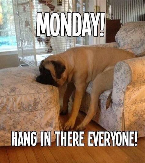 Monday Dog Meme - pin by lisa stille on things that make me lol pinterest