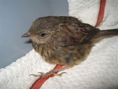 injured bird 2 flickr photo sharing