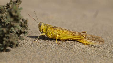 images beach sand dune wildlife yellow fauna