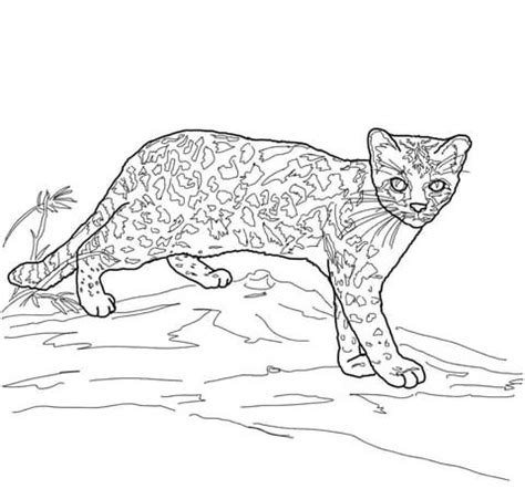 margay wild cat coloring page  printable coloring pages