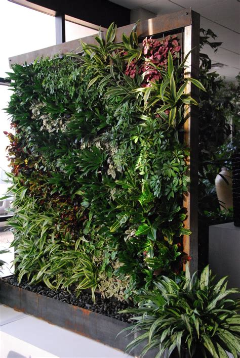 Vertical Garden by Growing Up Green Walls Vertical Gardens From Vines And
