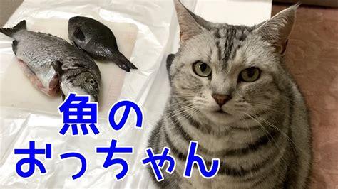 鹿児島 弁 しゃべる 猫