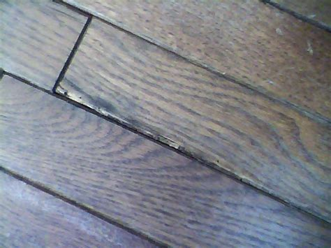 infested hardwood flooring how to prevent re infestation yikes i problems