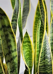 Houseplant, Week, Snake, Plants