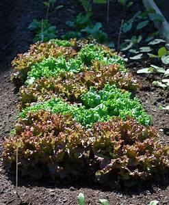 Quoi Planter En Automne : quoi planter en juin quoi planter en juin eiweiss quoi ~ Melissatoandfro.com Idées de Décoration