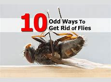 how to get rid of flies in the backyard 28 images how