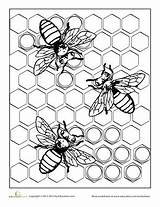 Bee Coloring Pages Honeycomb Worksheet Adults Bees Beehive Worksheets Grade Adult Insect Hexagon Education Honey Sheets Printable Bumble Pattern Templates sketch template
