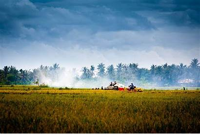Vietnam Asia Countryside Agriculture Farm Harvest Fields