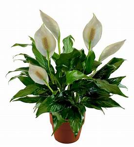 Flower Delivery Services | Send Flowers Online Nationwide ...