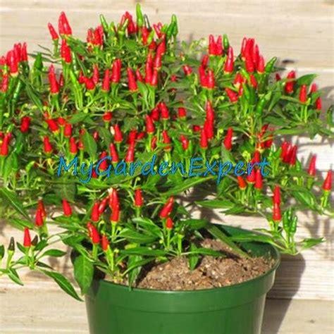 pflanzen für drinnen bonsais und weitere zimmer kunstpflanzen g 252 nstig
