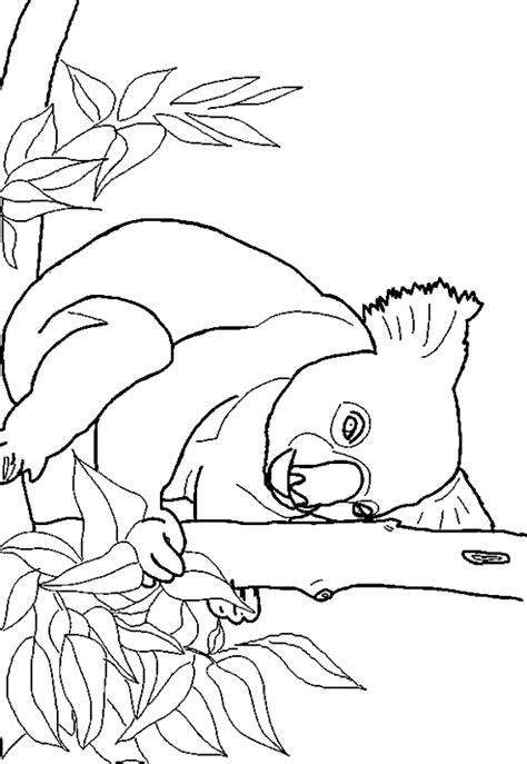 koala coloring pages    print