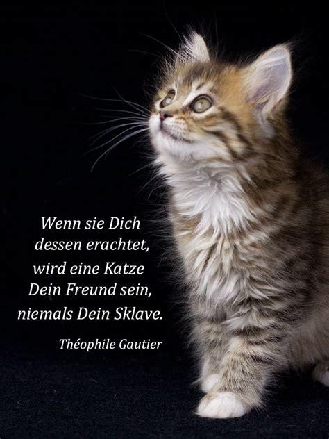 220 ber die freundschaft einer katze katzen poesie