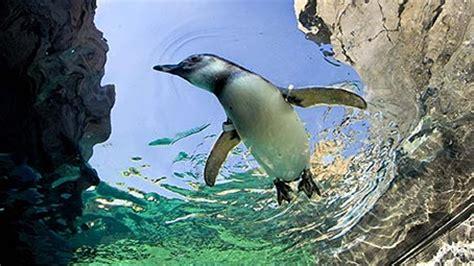 penguins theme  windows