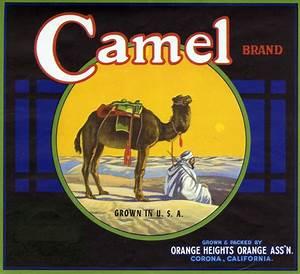 Citrus Label Collection    Camel Brand Jpg