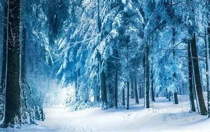 Winter Forest Fabulous Wallpapers Nature Desktop