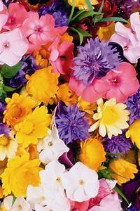 Amazing Colorful Flowers Iphone 3gs Wallpapers Free ...