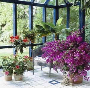 Kübelpflanzen Für Schatten : tropenterrasse im gro stadtdschungel garten pflanzen news green24 hilfe pflege bilder ~ Eleganceandgraceweddings.com Haus und Dekorationen