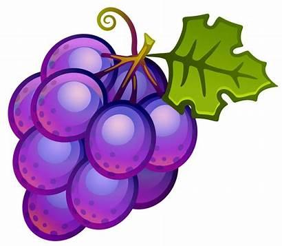 Clipart Grapes Painted Fruit Transparent Yopriceville