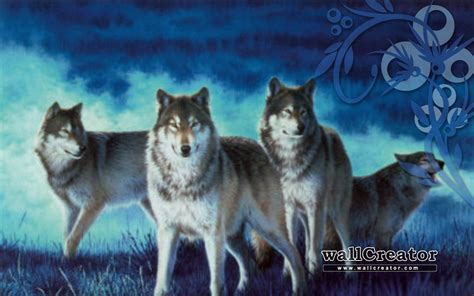 wolf pack wallpaper wallpapersafari