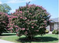 front yard trees Top Trees for Your Front Yard - Landscaping Network