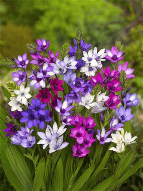flower bulbs summer flowering