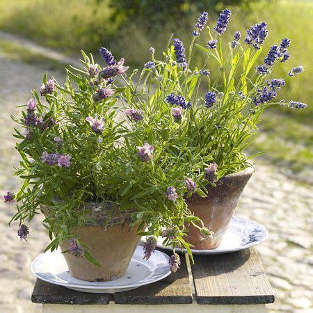 Garten Ideen Mit Lavendel by Deko Tischdeko Lavendel Lavendel Deko Und Bastelideen