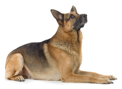 Dog Obedience Training Tips You Ought To Know  Blogged Topics
