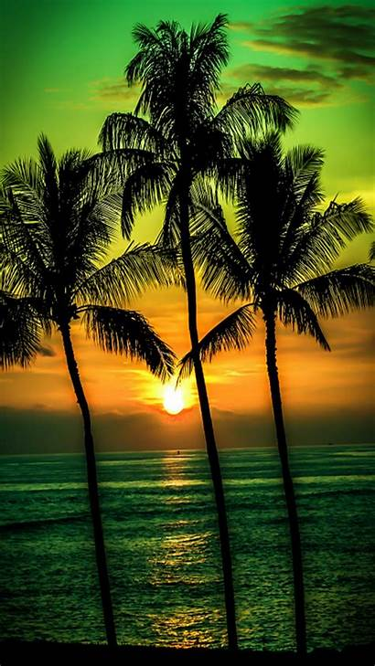 Sunset Palm Trees Tree Wallpapers Palms Beach