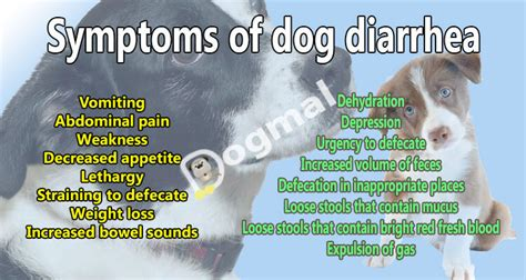 Bright Blood In Dogs Stool by Diarrhea Causes Symptoms Treatments