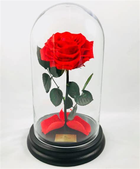 ewige rose  glasglocke konservierte rosen  der box