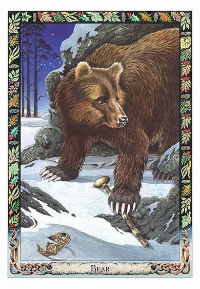 Animal Druid Oracle Card Cards Wisdom Bear