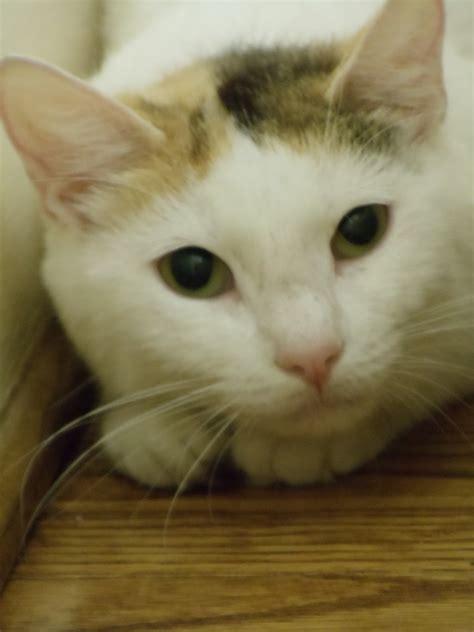 humane society  eastern carolina feral cats wild