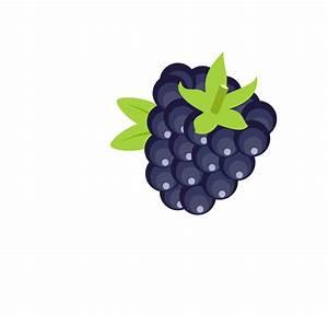 Free Stock Photo of Blackberry vector clipart - Public ...