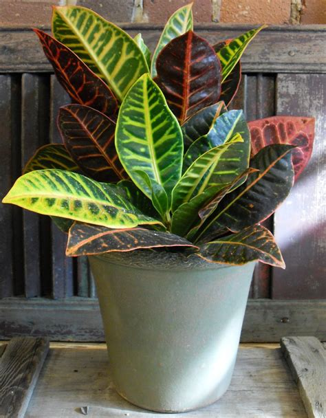 tropical house plants ideas tropical indoor plants http www 1sthomedecor com ideas tropical indoor plants